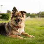 Pay Special Attention To Your Pet's Health